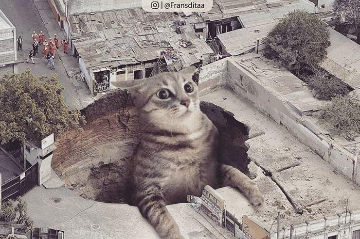 Cat - Ol @Fransditaa RECO