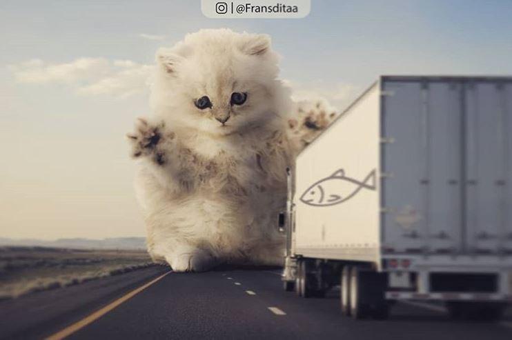 Transport - Ol @Fransditaa