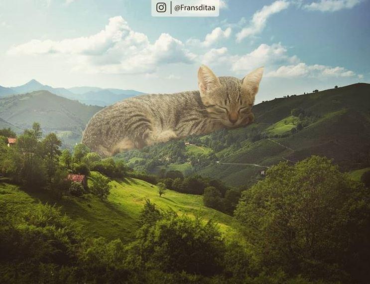 Cat - O @Fransditaa