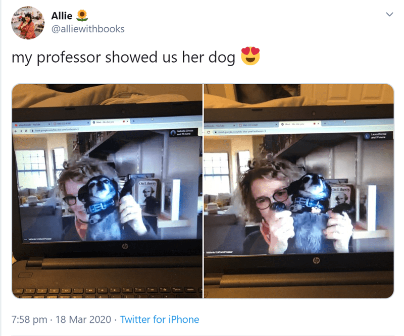Product - Allie @alliewithbooks my professor showed us her dog Met- e ttooke-lde OIN. metoe wtte he batela Ghe metg te t lner Pmore LaurWordal and more On Liberry On Liberry Melae oP 7:58 pm · 18 Mar 2020 · Twitter for iPhone