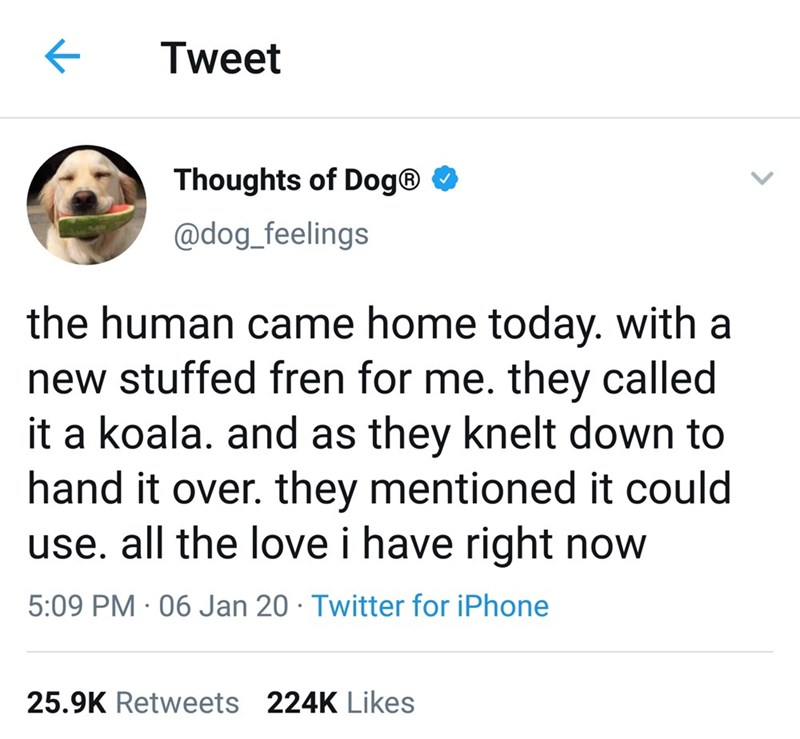 Text - Tweet Thoughts of Dog® O @dog_feelings the human came home today. with a new stuffed fren for me. they called it a koala. and as they knelt down to hand it over. they mentioned it could use. all the love i have right now 5:09 PM · 06 Jan 20 · Twitter for iPhone 25.9K Retweets 224K Likes