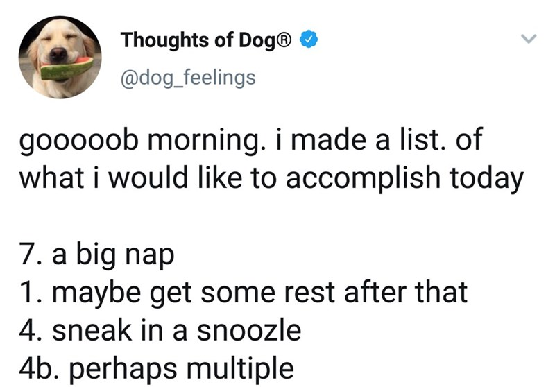 Text - Thoughts of Dog® O @dog_feelings gooooob morning. i made a list. of what i would like to accomplish today 7. a big nap 1. maybe get some rest after that 4. sneak in a snoozle 4b. perhaps multiple