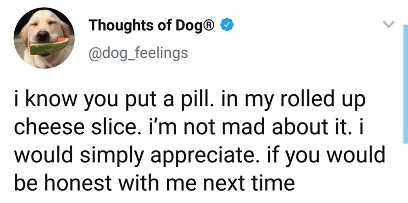 Text - Thoughts of Dog® O @dog_feelings i know you put a pill. in my rolled up cheese slice. i'm not mad about it. i would simply appreciate. if you would be honest with me next time