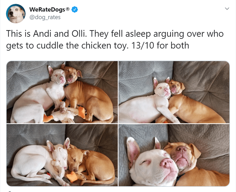Dog breed - WeRateDogs® @dog_rates This is Andi and Olli. They fell asleep arguing over who gets to cuddle the chicken toy. 13/10 for both
