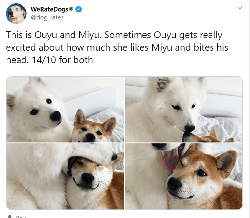 Canidae - WeRateDogs ® @dog_rates This is Ouyu and Miyu. Sometimes Ouyu gets really excited about how much she likes Miyu and bites his head. 14/10 for both