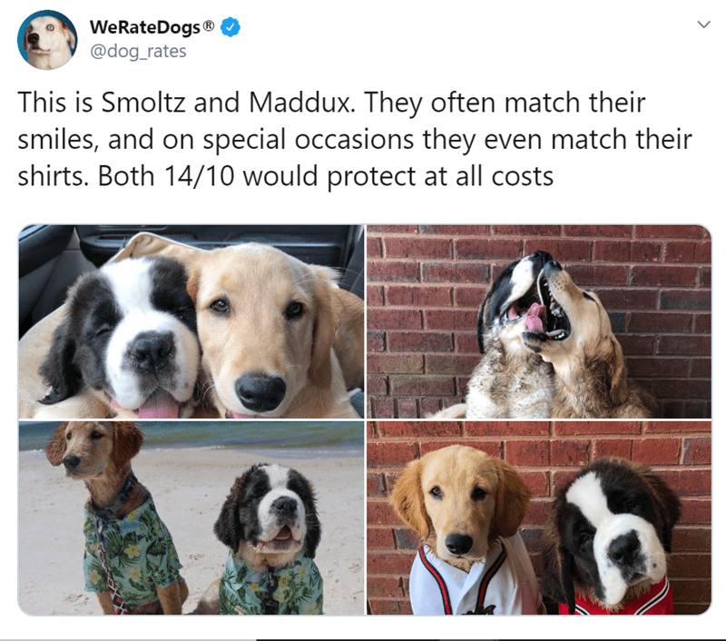 Vertebrate - WeRateDogs ® @dog_rates This is Smoltz and Maddux. They often match their smiles, and on special occasions they even match their shirts. Both 14/10 would protect at all costs