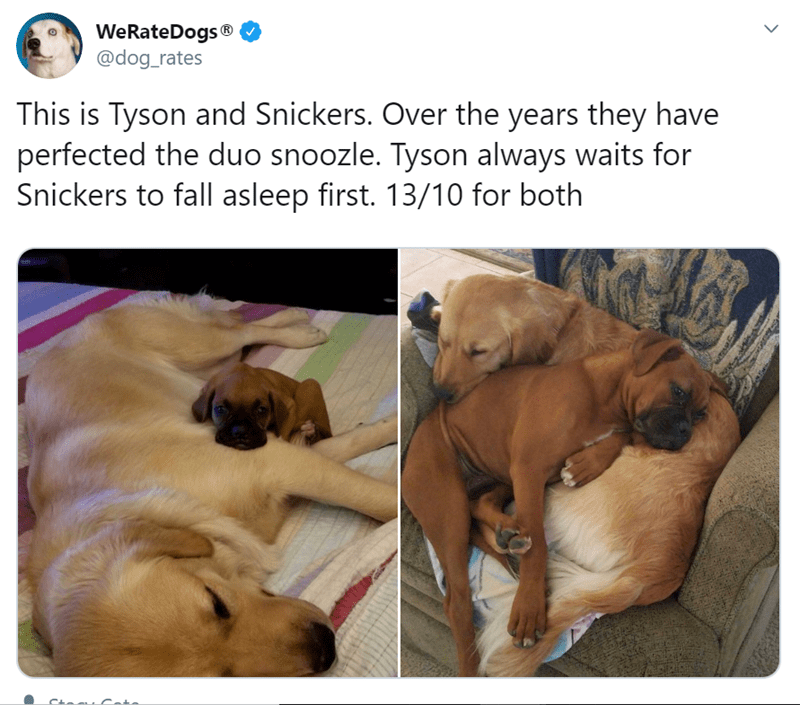 Dog - WeRateDogs® @dog_rates This is Tyson and Snickers. Over the years they have perfected the duo snoozle. Tyson always waits for Snickers to fall asleep first. 13/10 for both Cteu Cate