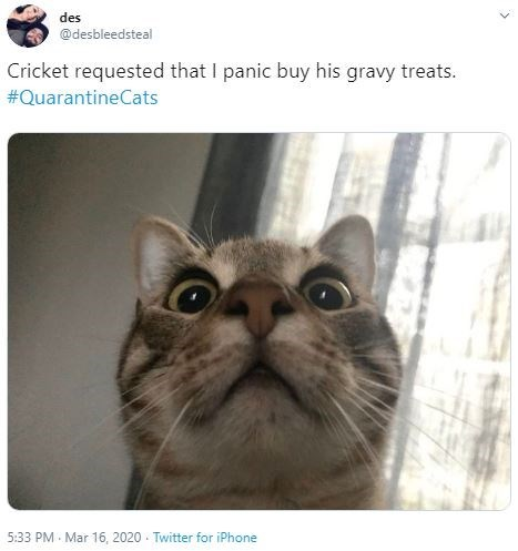 Cat - des @desbleedsteal Cricket requested that I panic buy his gravy treats. #QuarantineCats 5:33 PM - Mar 16 , 2020 - Twitter for iPhone