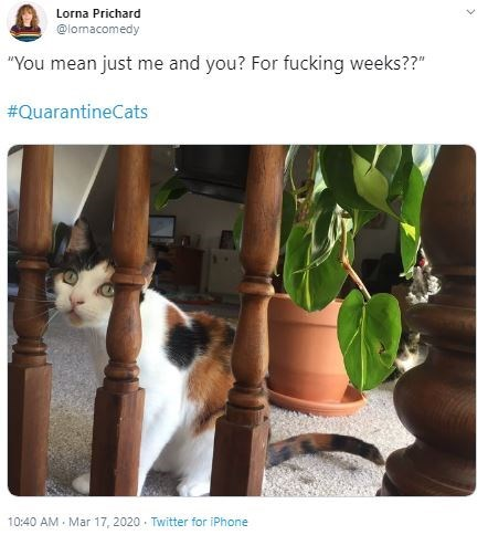 "Cat - Lorna Prichard @lomacomedy ""You mean just me and you? For fucking weeks??"" #QuarantineCats 10:40 AM - Mar 17, 2020 · Twitter for iPhone"