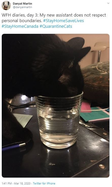 Photo caption - Danyal Martin @danyalmartin WFH diaries, day 3: My new assistant does not respect personal boundaries. #StayHomeSaveLives #StayHomeCanada #QuarantineCats 1:41 PM - Mar 18, 2020 · Twitter for iPhone