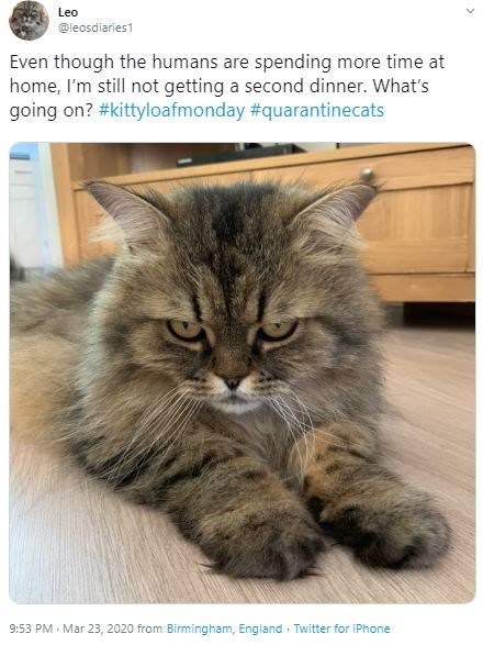 Cat - Leo @leosdiaries1 Even though the humans are spending more time at home, I'm still not getting a second dinner. What's going on? #kittyloafmonday #quarantinecats 9:53 PM · Mar 23, 2020 from Birmingham, England · Twitter for iPhone