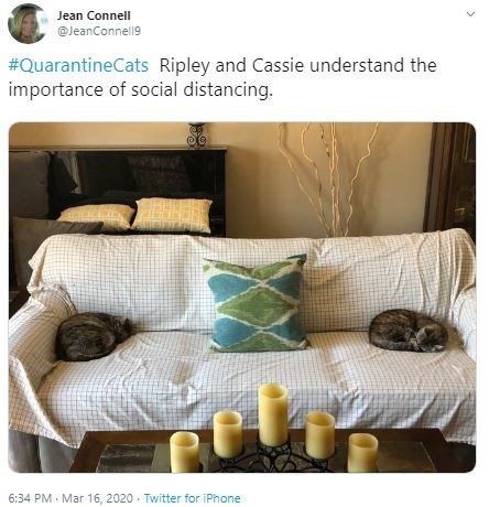 Product - Jean Connell @JeanConnell9 #QuarantineCats Ripley and Cassie understand the importance of social distancing. 6:34 PM Mar 16 , 2020 Twitter for iPhone