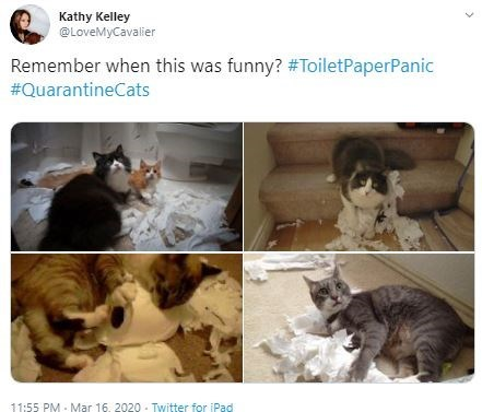 Cat - Kathy Kelley @LoveMyCavalier Remember when this was funny? #ToiletPaperPanic #QuarantineCats 11:55 PM - Mar 16. 2020 - Twitter for iPad