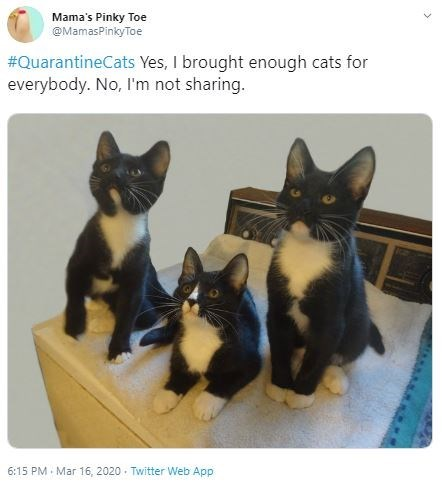 Cat - Mama's Pinky Toe @MamasPinkyToe #QuarantineCats Yes, I brought enough cats for everybody. No, I'm not sharing. 6:15 PM - Mar 16, 2020 Twitter Web App