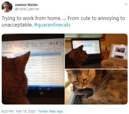 Cat - Jeanine Nistler @nistler_jeanine Trying to work from home... From cute to annoying to unacceptable. #quarantinecats 6:25 PM Mar 16, 2020 · Twitter Web App