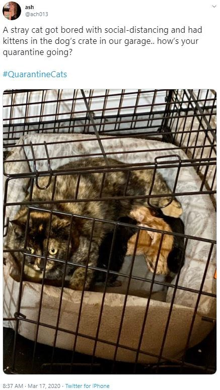 Cage - ash @ach013 A stray cat got bored with social-distancing and had kittens in the dog's crate in our garage.. how's your quarantine going? #QuarantineCats 8:37 AM - Mar 17, 2020 - Twitter for iPhone