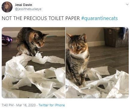Cat - Jessi Davin @jessithebuckeye NOT THE PRECIOUS TOILET PAPER #quarantinecats 7:40 PM · Mar 16, 2020 · Twitter for iPhone