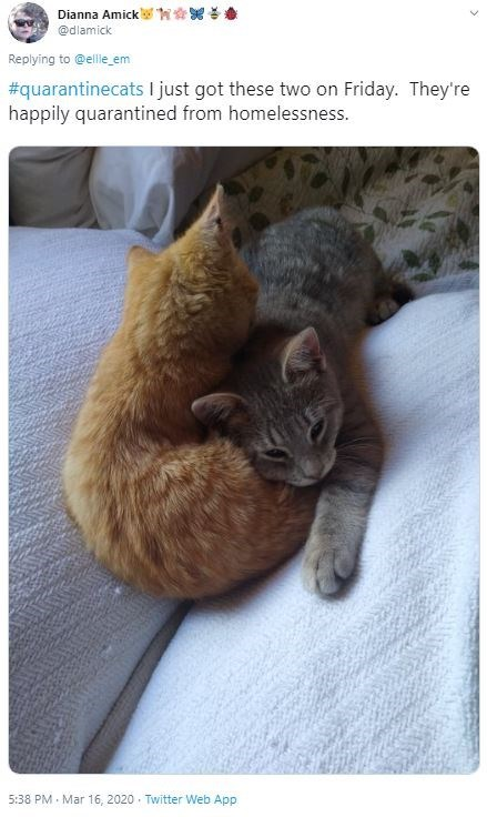 Cat - Dianna Amick W @dlamick Replying to @ellie_em #quarantinecats I just got these two on Friday. They're happily quarantined from homelessness. 5:38 PM - Mar 16, 2020 · Twitter Web App
