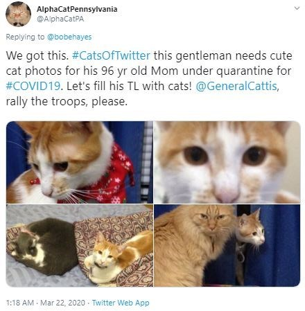 Cat - AlphaCatPennsylvania @AlphaCatPA Replying to @bobehayes We got this. #CatsOfTwitter this gentleman needs cute cat photos for his 96 yr old Mom under quarantine for #COVID19. Let's fill his TL with cats! @GeneralCattis, rally the troops, please. 1:18 AM Mar 22, 2020 - Twitter Web App