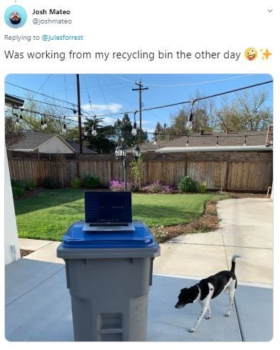Canidae - Josh Mateo @joshmateo Replying to @julesforrest Was working from my recycling bin the other day