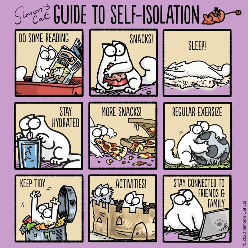 guide to self isolation cat comic do some reading snacks sleep stay hydrated more snacks regular exercise