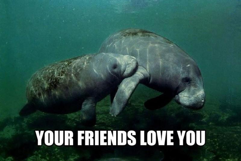Vertebrate - YOUR FRIENDS LOVE YOU