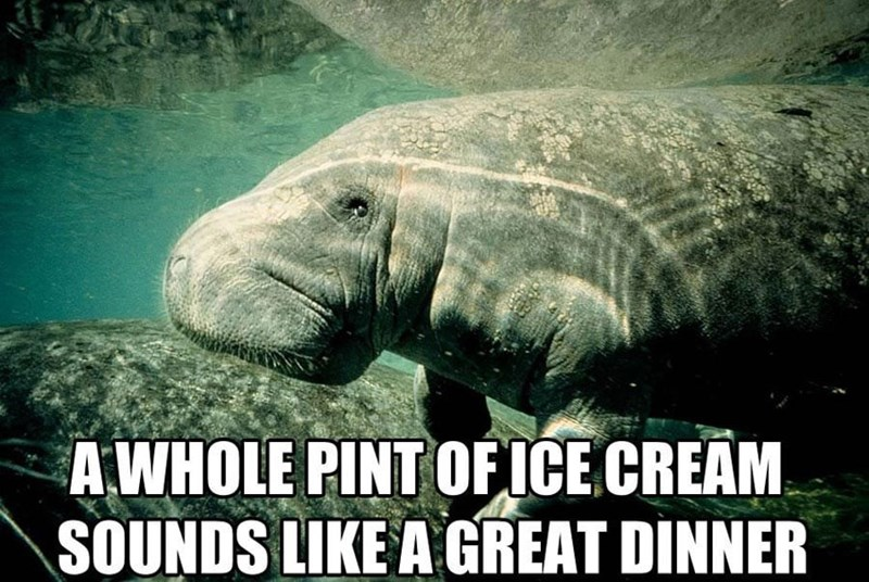 Manatee - A WHOLE PINT OF ICE CREAM SOUNDS LIKE A GREAT DINNER