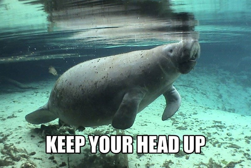 Vertebrate - KEEP YOUR HEAD UP