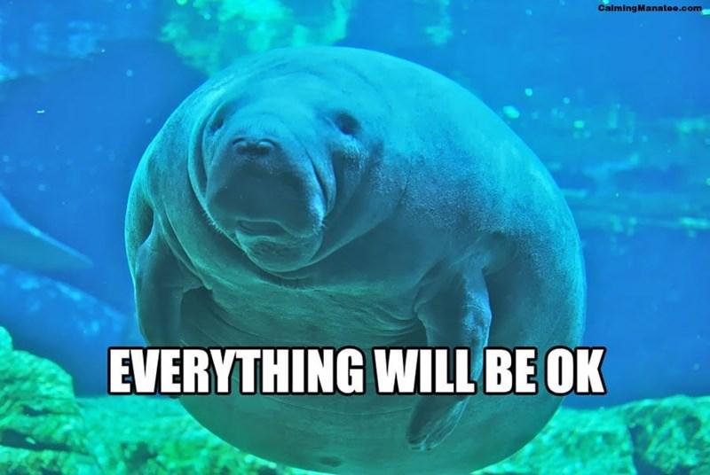 Manatee - CalmingManatee.com EVERYTHING WILL BE OK