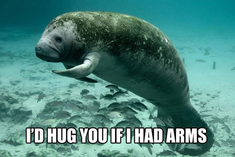 Vertebrate - ID HUG YOU IFI HAD ARMS