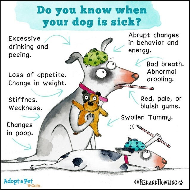 Cartoon - Do you know when your dog is sick? Abrupt changes in behavior and Excessive drinking and peeing. energy. Loss of appetite. Change in weight. K Bad breath. Abnormal drooling. Red, pale, or bluish gums. Stiffnes. Weakness. Swollen Tummy. Changes in poop. Adopt a Pet Com. © REDANDHOWLING