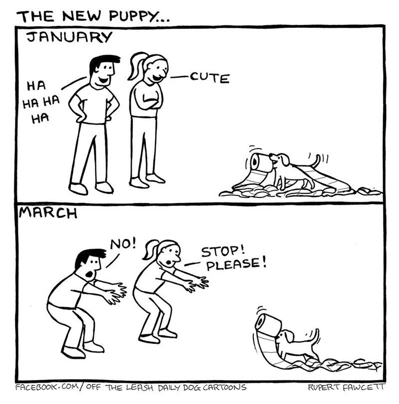 Line art - THE NEW PUPPY... JANUARY -CUTE НА HA HA НА MARCH NO! STOP! PLEASE! FACEBOOK.COM/ OFF THE LEASH DAILY DOG CARTOONS RUPERT FAWCETT
