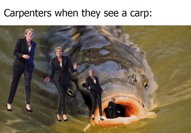 Fish - Carpenters when they see a carp: