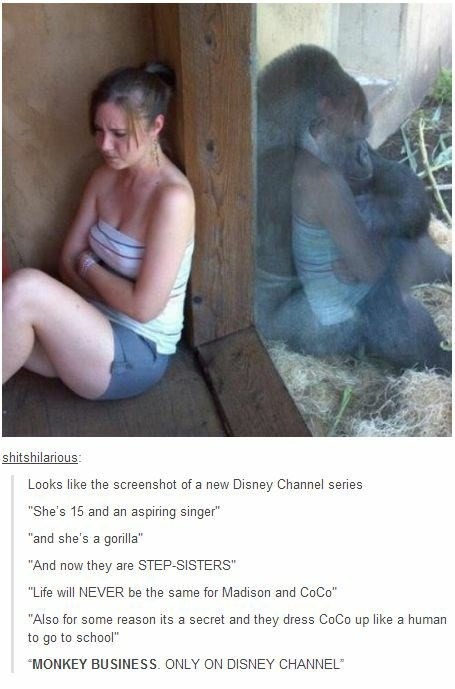 "Adaptation - shitshilarious: Looks like the screenshot of a new Disney Channel series ""She's 15 and an aspiring singer"" ""and she's a gorilla"" ""And now they are STEP-SISTERS"" ""Life will NEVER be the same for Madison and CoCo"" ""Also for some reason its a secret and they dress CoCo up like a human to go to school"" ""MONKEY BUSINESS. ONLY ON DISNEY CHANNEL"