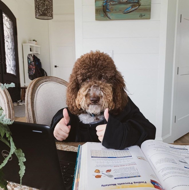 Dog - Finding Percents Mentally DE