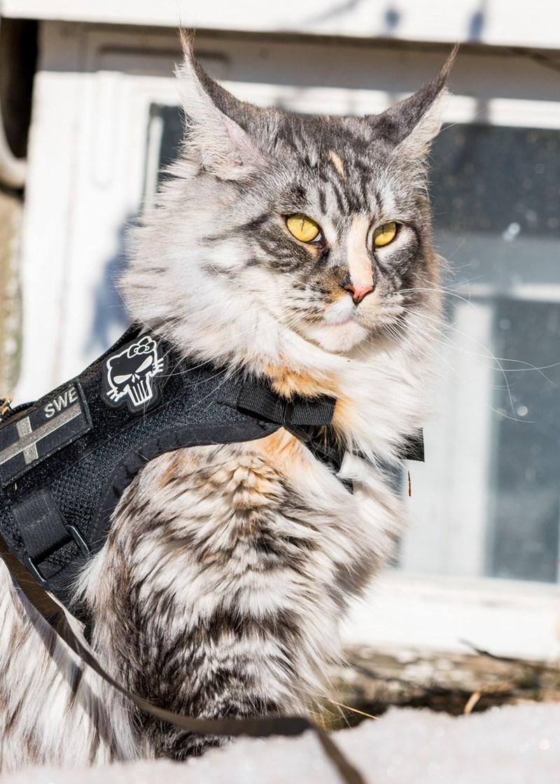 Cat - SWE
