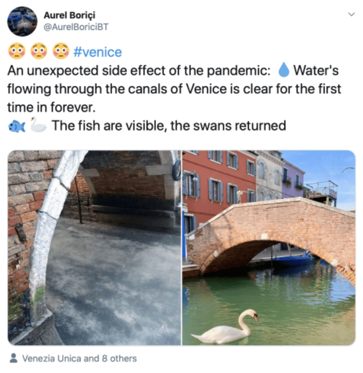 an unexcpected side effects of the pandemic water's flowing through the canals of venice is clear for the first time in forever fish are visible the swans returned