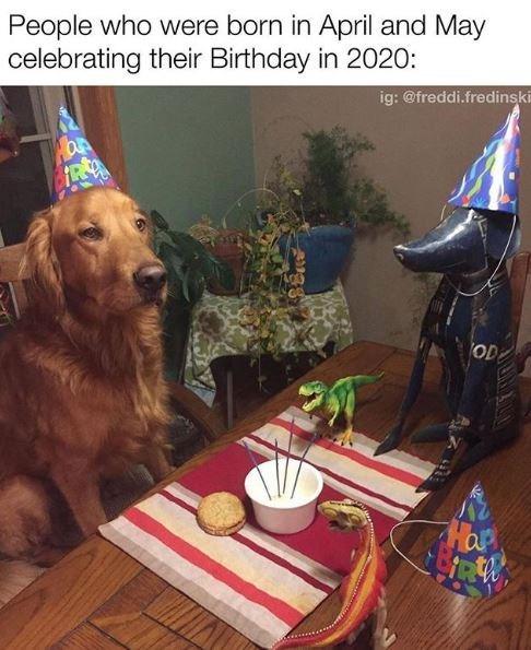 Dog - People who were born in April and May celebrating their Birthday in 2020: ig: @freddi.fredinski OD Hap