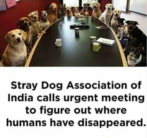 Dog breed - Stray Dog Association of India calls urgent meeting to figure out where humans have disappeared.