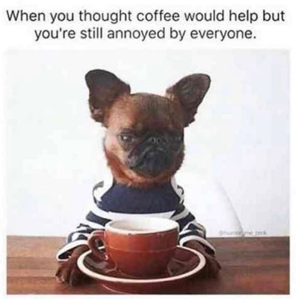 Dog - When you thought coffee would help but you're still annoyed by everyone.