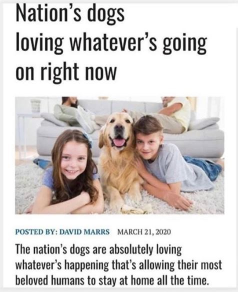 Facial expression - Nation's dogs loving whatever's going on right now POSTED BY: DAVID MARRS MARCH 21, 2020 The nation's dogs are absolutely loving whatever's happening that's allowing their most beloved humans to stay at home all the time.