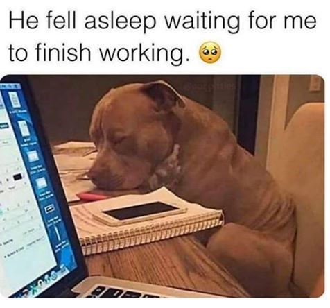 Dog - He fell asleep waiting for me to finish working.