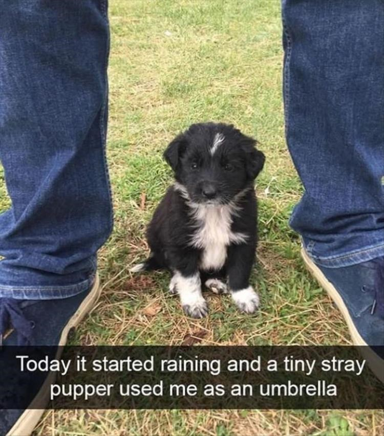 Dog - Today it started raining and a tiny stray pupper used me as an umbrella