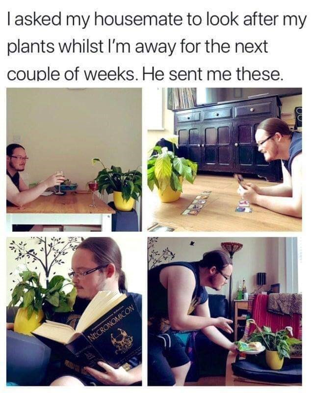 Text - Organism - Iasked my housemate to look after my plants whilst l'm away for the next couple of weeks. He sent me these. NECRONOMICON