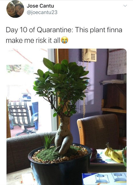 Houseplant - Jose Cantu @joecantu23 Day 10 of Quarantine: This plant finna make me risk it all