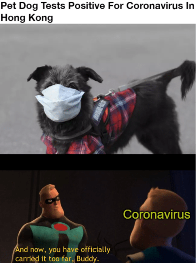Dog breed - Pet Dog Tests Positive For Coronavirus In Hong Kong Coronavirus And now, you have officially carried it too far, Buddy.