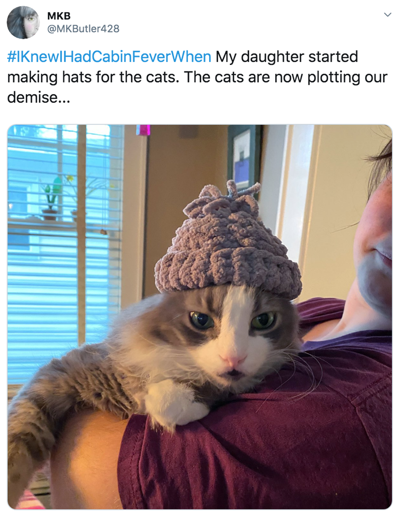 Cat - MKB @MKButler428 #IKnewlHadCabinFeverWhen My daughter started making hats for the cats. The cats are now plotting our demise...