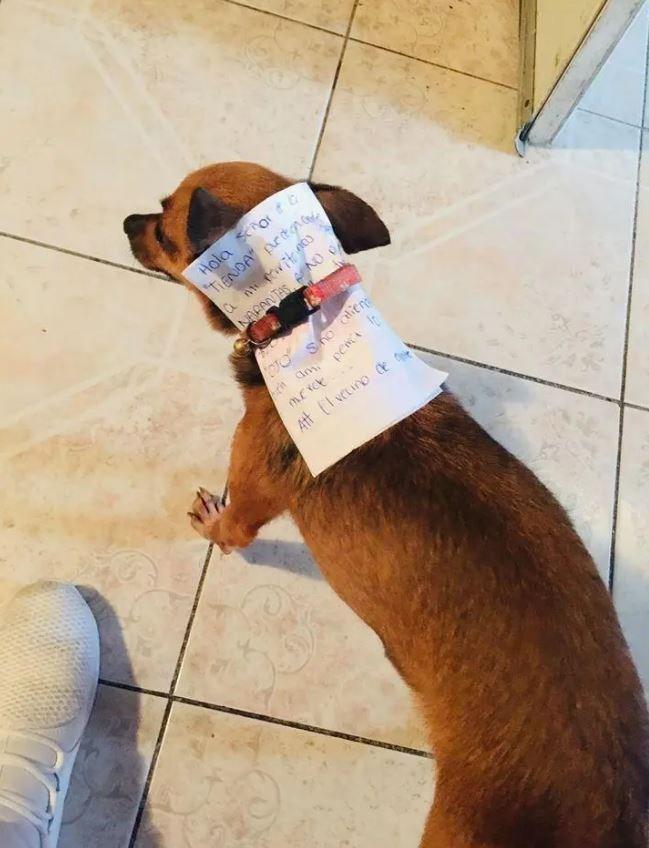 Dog breed - Hola SorO TIENDA Artnca NAPNTAS N0 Att (Ivecino de qe