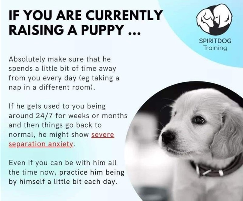puppy psa helpful - 9461465344