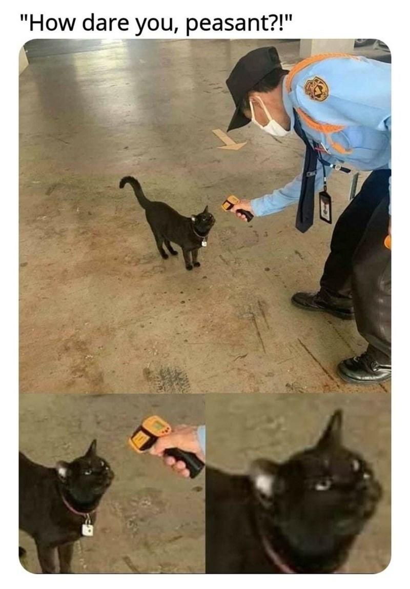"Cat - ""How dare you, peasant?!"""